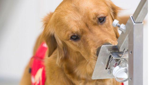 México reporta cinco casos de perros con COVID-19
