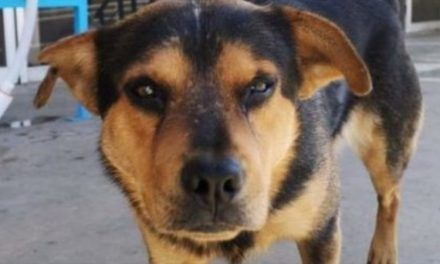 Canino espera a su amo que murió de Covid afuera del hospital