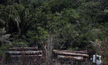 Brasil decomisa carga récord de madera talada ilegalmente en la Amazonía