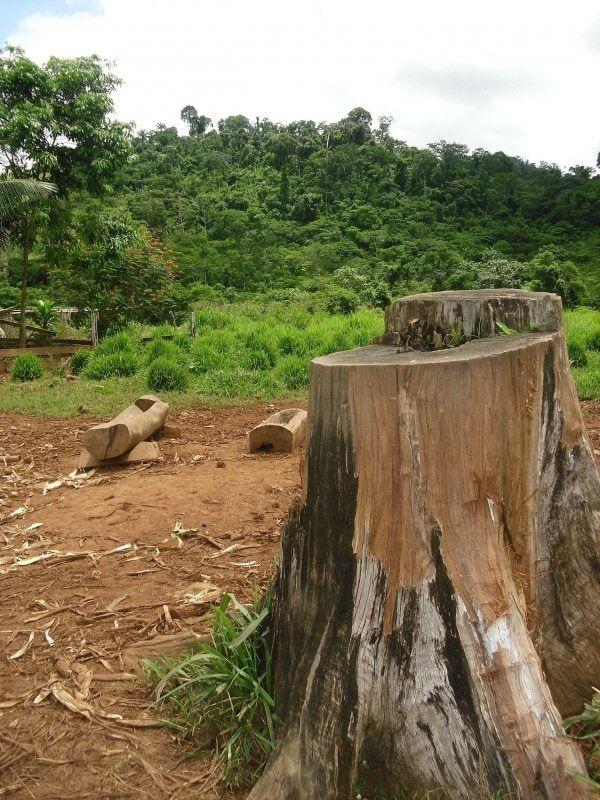 Hasta ahora la mayor aprehensión de madera extraída ilegalmente de la Amazonía era de 65.000 metros cúbicos de troncos.