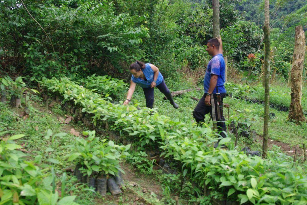 En Huila hay 500 excombatientes de Farc que reciben apoyo del gobierno en proyectos productivos.