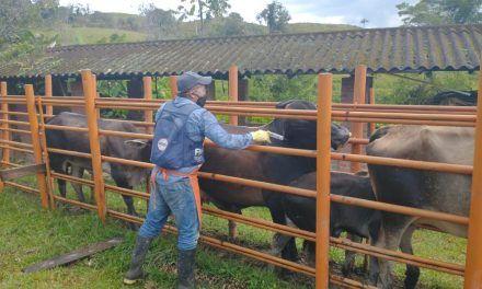 Cerca de 14,4 millones de bovinos han sido vacunados contra fiebre aftosa