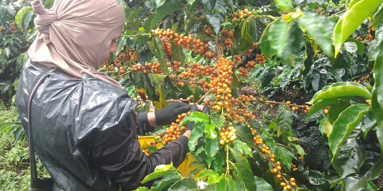 Concurso escogió las mejores tazas de café en el Huila