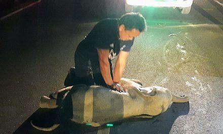 Hombre reanimó a un pequeño elefante atropellado en Tailandia