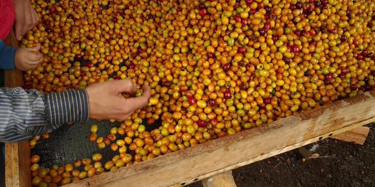 Nuevos beneficios para el sector agropecuario del Huila