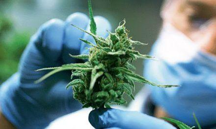 El Gobierno impulsa la industria del cannabis 