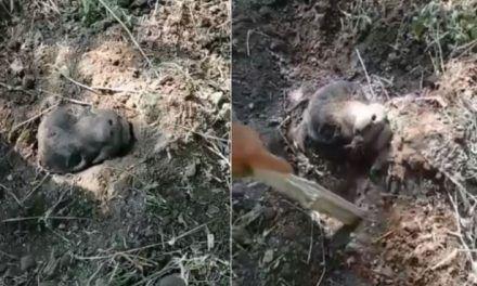 Rescatan a perro que fue enterrado vivo en Tolima