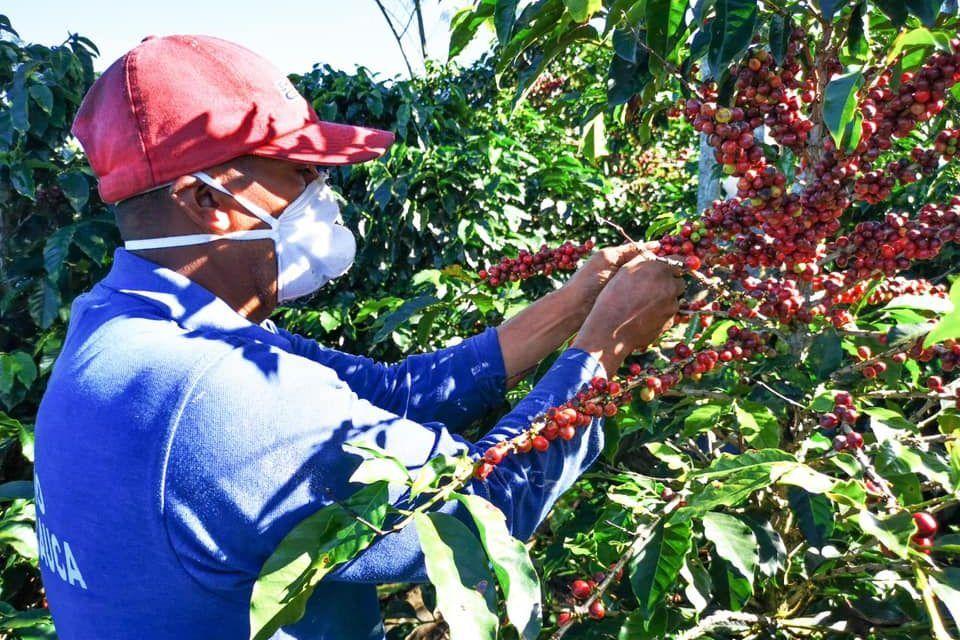 Producción de café en Colombia bajó 6 %