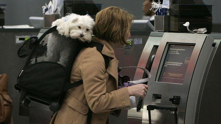 Requisitos para viajar con su mascota en Colombia