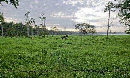Imputan a a exsecretaria de agricultura de Caquetá por irregularidades en reforestación
