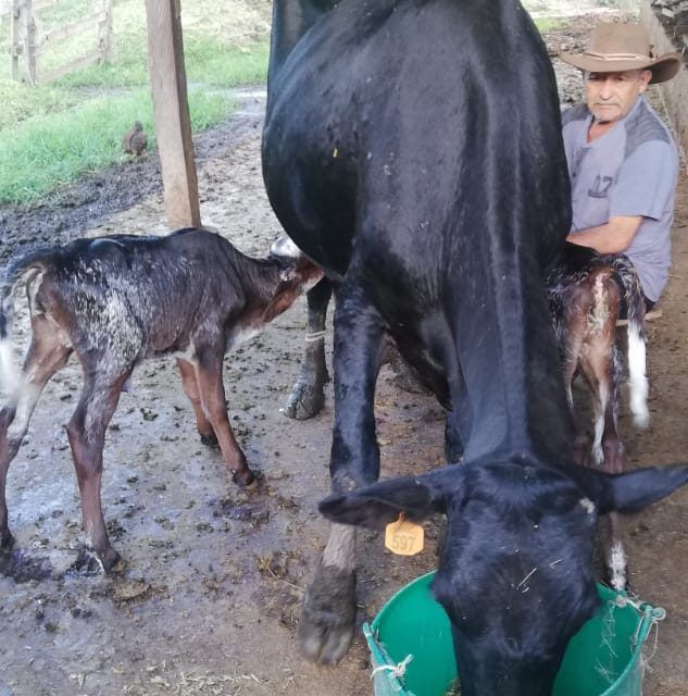 Fedegán alerta por importación masiva de productos lácteos a solo 4 días de 2021