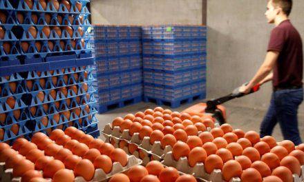 Los colombianos consumen en promedio 291 huevos al año
