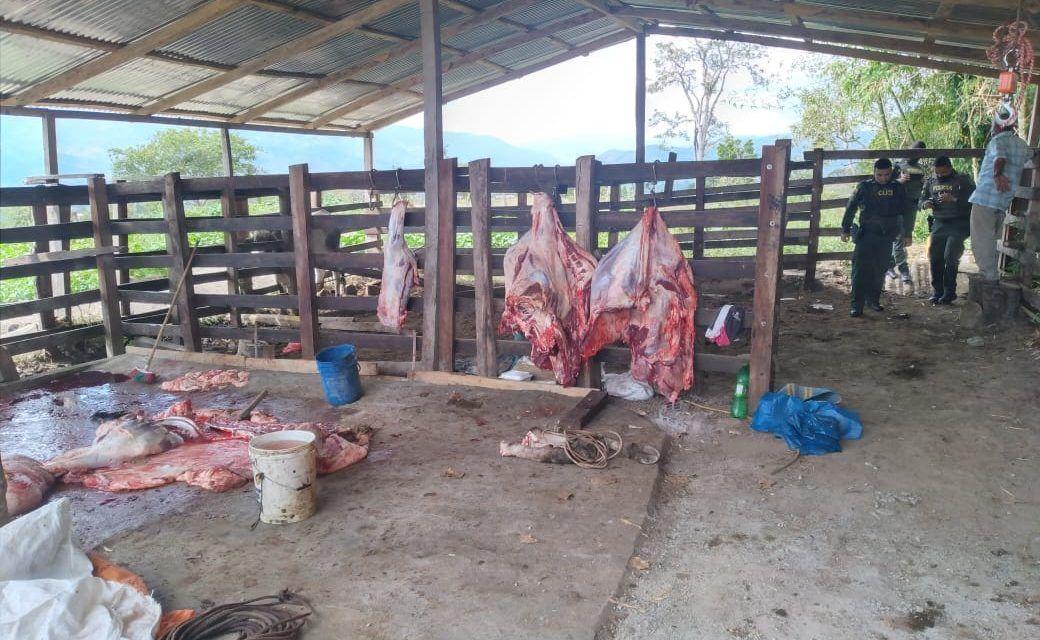 Incautan 250 kilos de carne en matadero clandestino en Saladoblanco