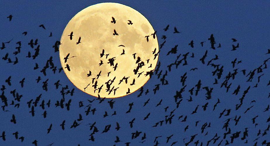 Cientos de pájaros murieron en Roma tras los fuegos artificiales de Año Nuevo
