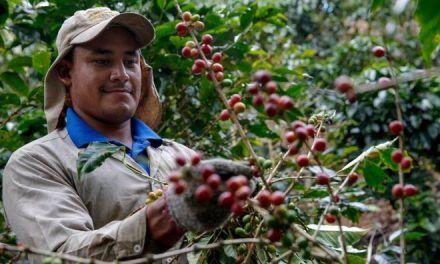 Exportaciones en el Huila fue impulsado por el café