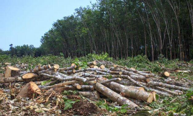 Preocupa deforestación en el mundo