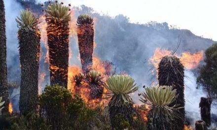 Incendio en el páramo de Saturbán completa tres días y deja daños irreparables