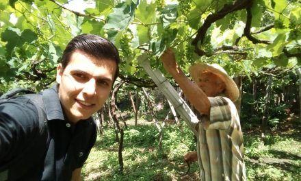 Uva Isabella, una fruta con oportunidades