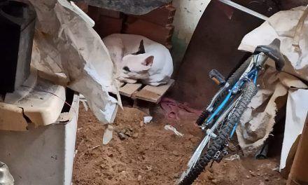 Canino fue rescatado por presunto maltrato animal en Granjas