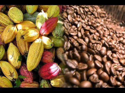 Huila sede de feria internacional de café y cacao el 2021