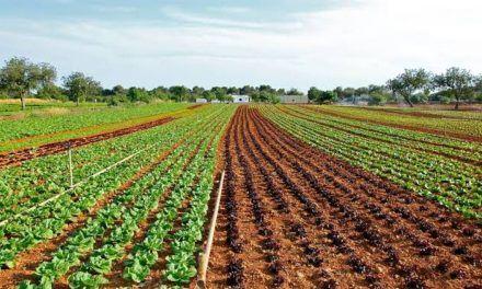 2020 reportó cifras históricas en exportaciones agropecuarias