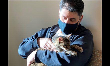Una gata perdida hace 15 años se reencontró con su dueño en EE. UU.