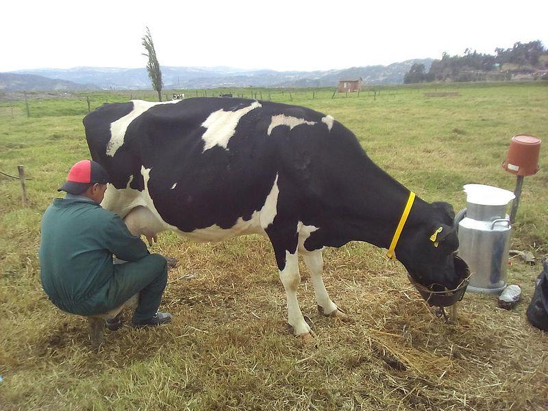Nace Almagán, el marketplace que llevará a cada rincón del país productos y servicios para los ganaderos
