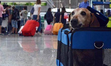 Pliego de cargos a cuatro empresas por infracciones al transporte de mascotas