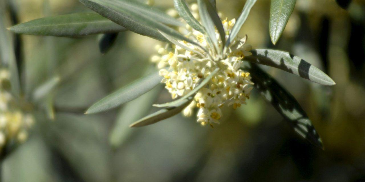 Las borrascas podrían favorecer una primavera más explosiva