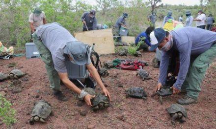 Liberan a 191 tortugas en una isla del archipiélago de Galápagos