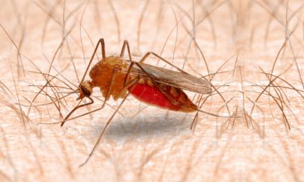 El cambio climático puede aumentar la transmisión de la malaria en África