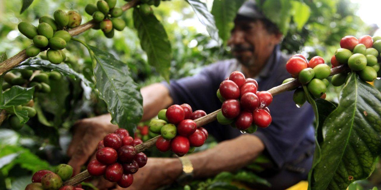 Producción de café de Colombia crece 11 % en febrero