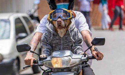 Natacha, la perra que maneja moto, despierta críticas