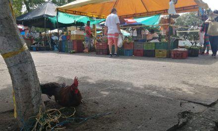 Mercado campesino de Calixto Leyva, más de 36 años haciendo parte de los neivanos