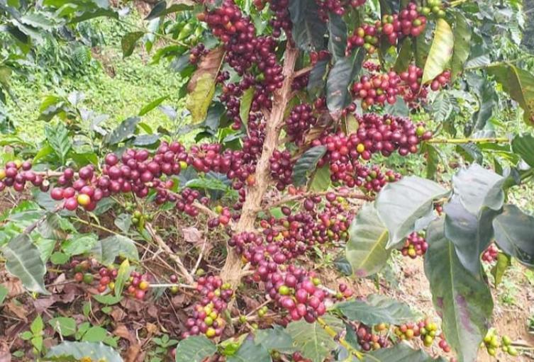 Los agricultores exigieron a las autoridades gestionar recursos para resarcir los daños en las plantaciones.