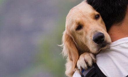 Proponen que, por ley, haya una cátedra de protección animal en los colegios