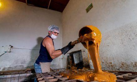 El cultivo de caña de azúcar para panela en Colombia, revela su potencial