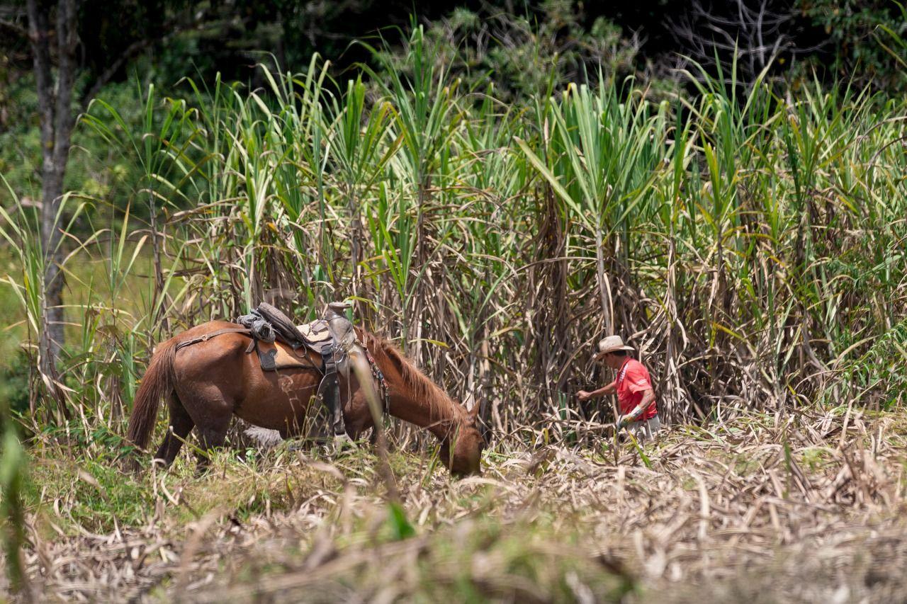 La Unidad de Planificación Rural Agropecuaria-UPRA, formuló el mapa de zonificación de caña de azúcar para la producción de panela.