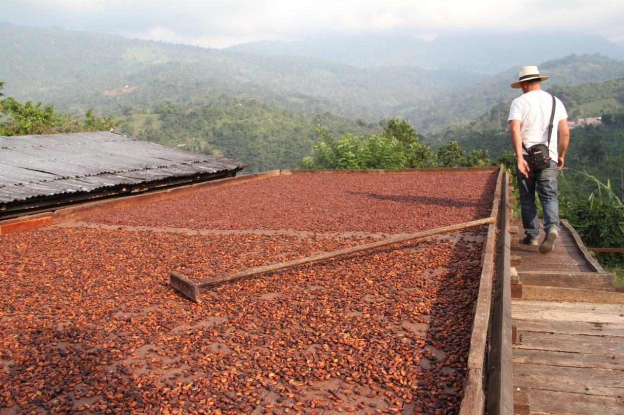 Gremio cacaotero con grandes expectativas