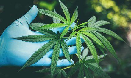 El Huila contará con Comité Departamental De Cannabis Medicinal
