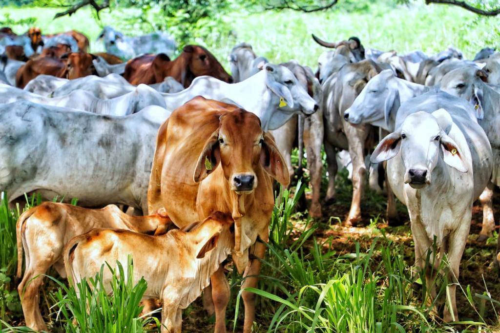 Se duplicaron exportaciones de carne y animales vivos en primer bimestre de 2021
