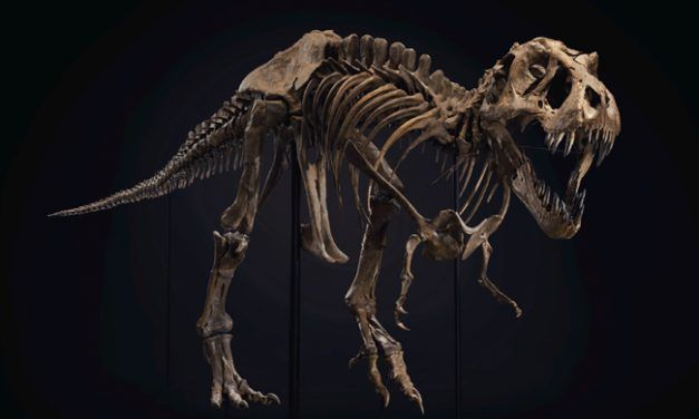 Estudio asegura que unos 2.500 millones de Tiranosaurios rex habitaron la Tierra