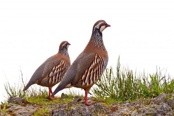 El 37% de las aves comunes se encuentra en situación desfavorable