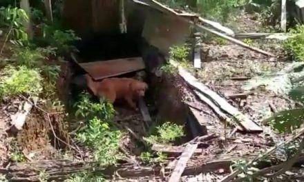 Explosivos de disidencias pretendían frenar erradicación en Guaviare