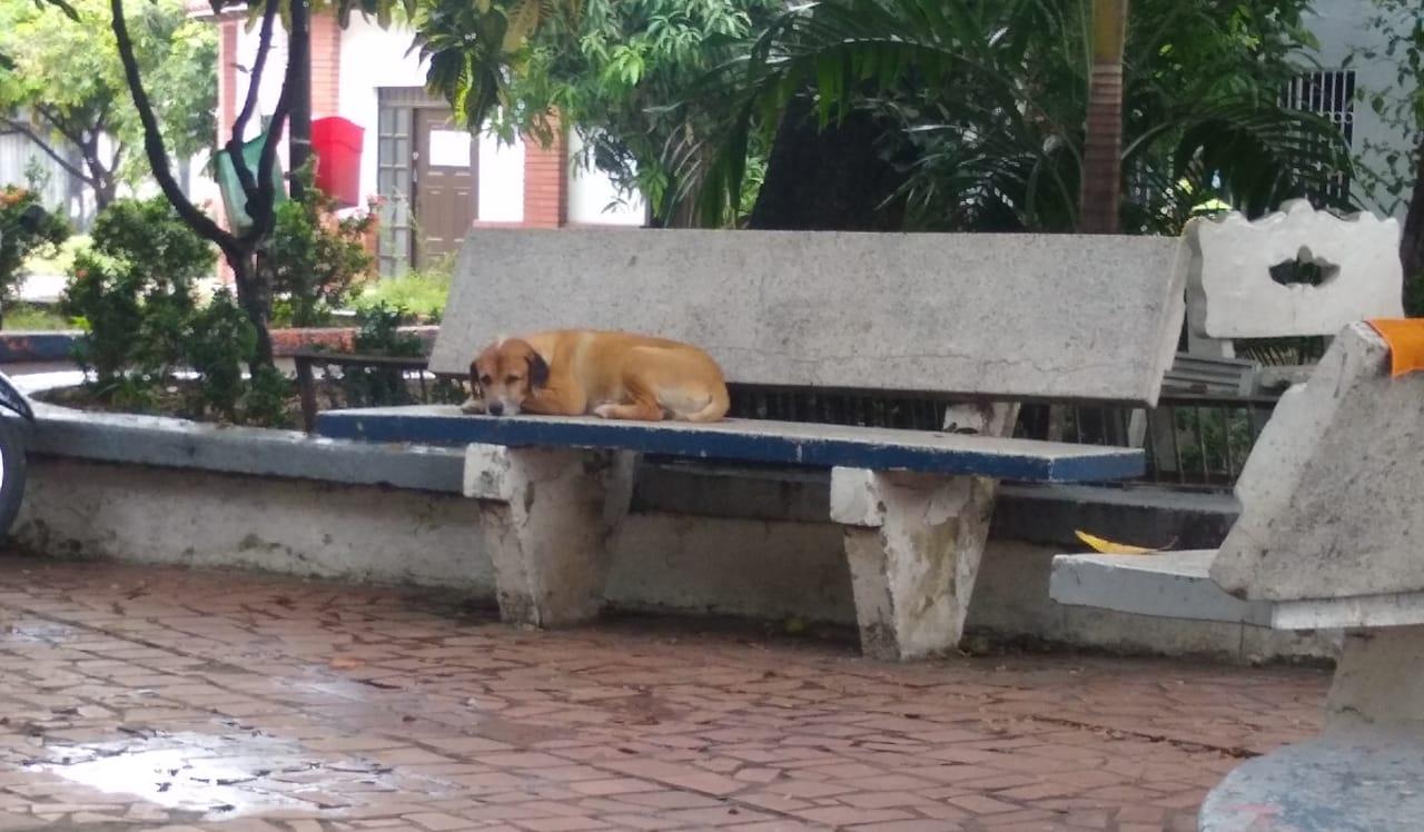 Los perros callejeros encuentran un lugar de atención. Los cuida la comunidad y la policía