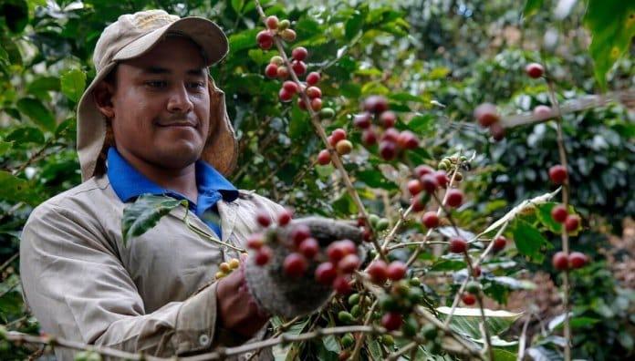 El paro y su incidencia negativa en el sector del café