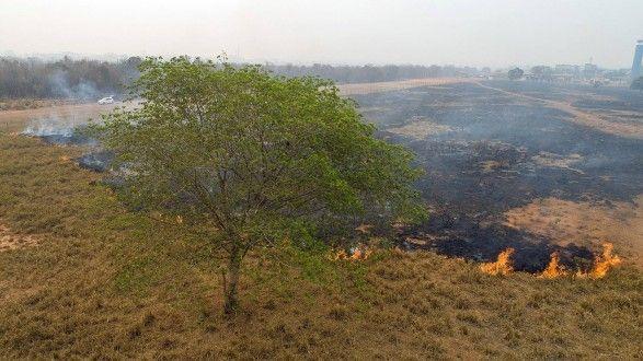 Deforestación en la Amazonía brasileña rompe récord en abril