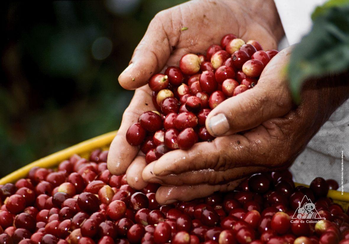 Producción de café creció 9% en abril