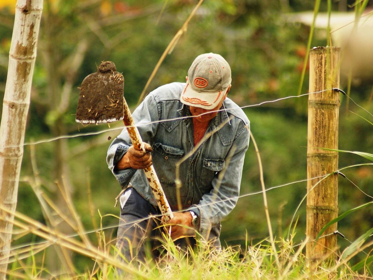 Cambio positivo en los ingresos rurales, en el marco de la pandemia redujeron la pobreza