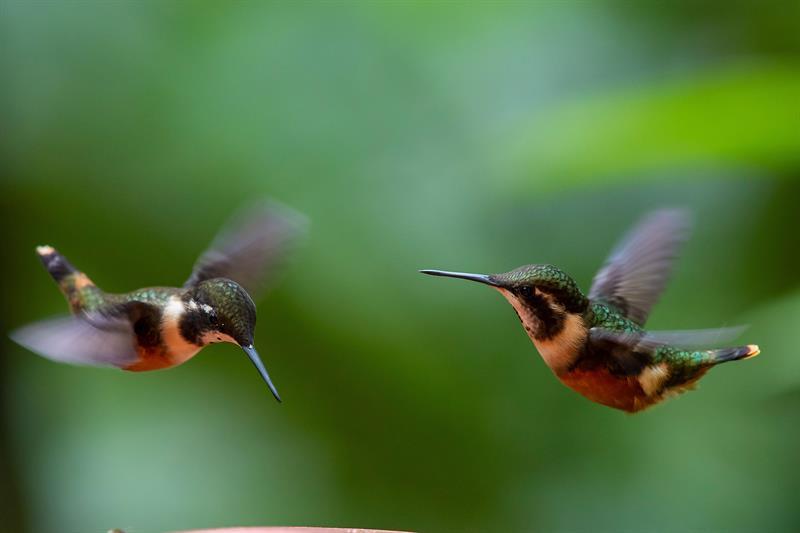 Quito, un paraíso para el avistamiento de aves y el ecoturismo